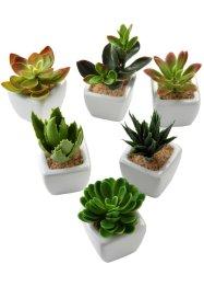 Kunstpflanzen Sukkulenten (6-tlg.Set), bpc living bonprix collection