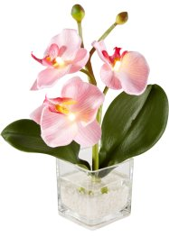 LED Kunstblume Orchidee, bpc living bonprix collection