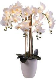 LED-Kunstblume Orchidee, bpc living bonprix collection