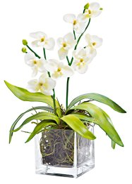 "Orchideenkranz+Orchidee ""Nature"" (Home Collection)"