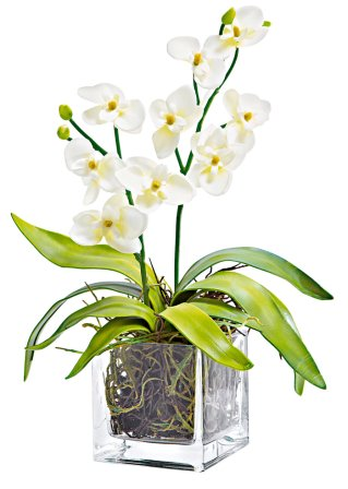 "Orchideenkranz+Orchidee ""Nature"""