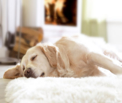 hochflor teppiche gem tliche wohnmomente bonprix. Black Bedroom Furniture Sets. Home Design Ideas