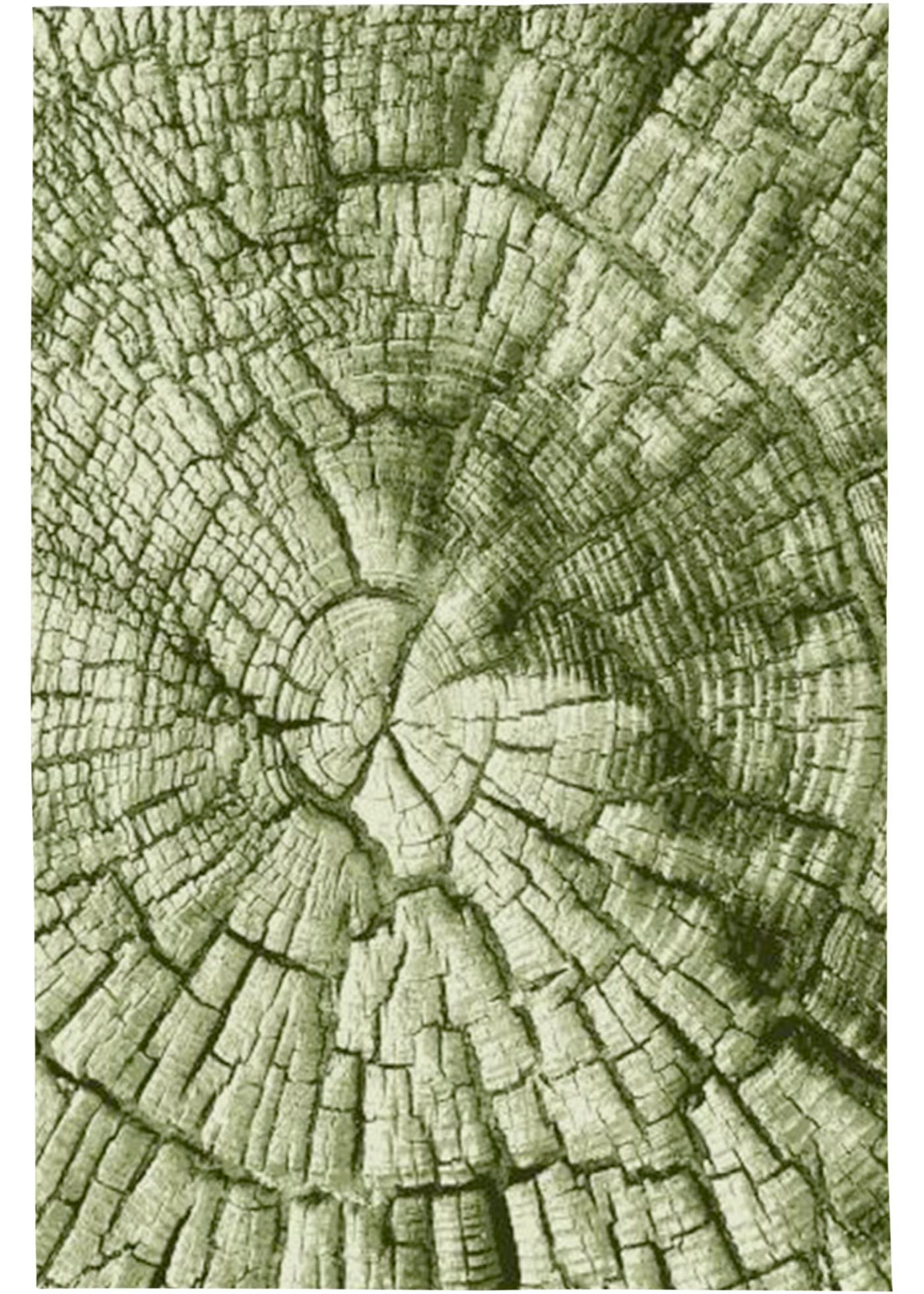 In- und Outdoor Teppich in Holzoptik in grün von bonprix