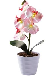 LED-Orchidee im Topf, bpc living, rosa