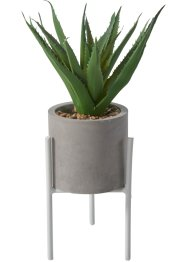 "Deko-Pflanze ""Aloe Vera"", bpc living bonprix collection"