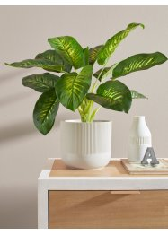 Kunstpflanze Dieffenbachia, bpc living bonprix collection