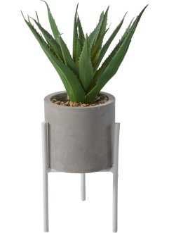 Kunstpflanze Aloe Vera, bpc living bonprix collection